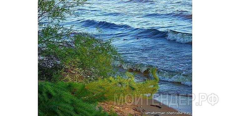 Мойтендер.рф-1648-77-11513: Фото 3